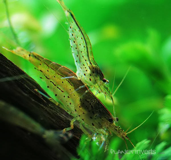 Planeta Invertebrados Brasil -